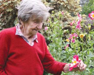 Betty Dodds of Te Anau, in her garden admiring her dahlia bloom. Betty is the original organiser...