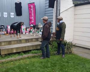 The Mackenzie Young Farmers Bark Up returned to the town last weekend, attended by dozens of dogs...