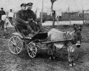 Tommies out for a joyride in a donkey cart near the Italian front. - Otago Witness, 10.4.1918....