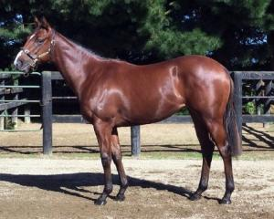 This Ghibellines filly from Pure Theatre mare Sheeza Drama is part of the White Robe Lodge draft...