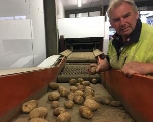 Jeff Bruce, of Caithness Farm, near Waimate, has given 80 10kg bags of Nadine potatoes to the...