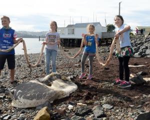 Broad Bay children (from left) Tristan Graham (11), Xanthe Dougherty (10), Anika Biggin (8) and...