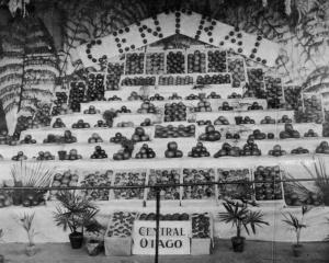 The Otago Central display at the National Apple Show, held in Auckland. - Otago Witness, 15.5.1918.