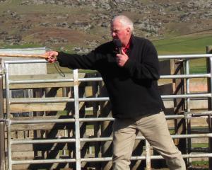 Hereford breeder and judge Bruce Robertson, of Duncraigen Herefords stud, Mimihau, near Wyndham,...