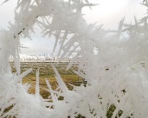 Some very long ice needles on this fence near Lauder last Wednesday during Central Otago's hoar...