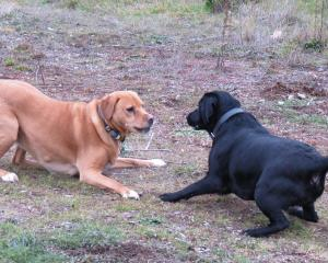 Elly (left), of Ettrick, makes a new friend during a recent outing to the site of the proposed...