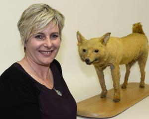 The University of Otago's Karen Greig pictured with an extinct kuri dog at the Otago Museum in...
