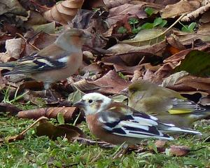 Anyone got any ideas what this bird is? Jim Fraser sent us this photograph, wondering if it is...
