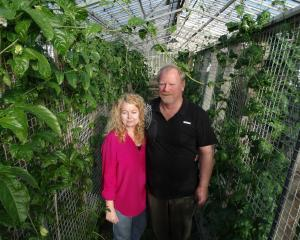 Jo and Gary Story are trialling a range of fruits and vegetables at their Kakanui property,...