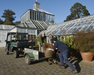 Dunedin Botanic Garden winter garden glasshouse curator Stephen Bishop (left) is given some...