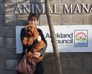 Jo Hodge reunited with cavoodle Bowie this morning. Photo: Auckland Council Animal Shelters via...