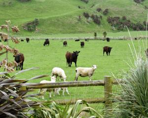 About 24% of the country's native vegetation cover is estimated to be on sheep and beef farms....