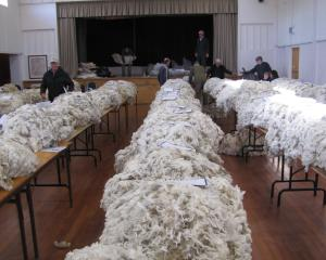 Fleeces are weighed and tested in the Tarras Hall before the Golden Fleece event in Wanaka last...