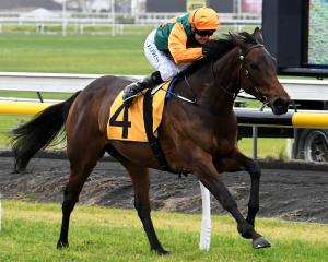 New York Minute scores a front-running win in the Opunake Cup for rider Lisa Allpress. Photo:...
