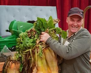 Mike Symonds, of Waipahi, won the heaviest individual fodder beet section of the Clinton Lions...