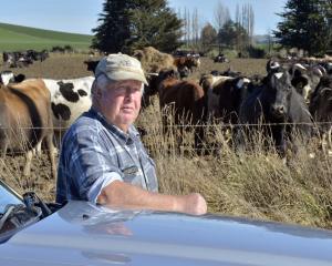 Ivan Roulston has had 65 in-calf dairy cows stolen from his Toropuke dairy farm. PHOTO: GERARD O...