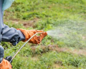 An alternative to Roundup could be more toxic chemicals, Federated Farmers says. Photo: Getty