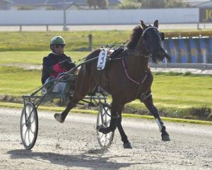 Hit The Sky is a strong winning chance at Forbury Park tomorrow. Photo: Jonny Turner.