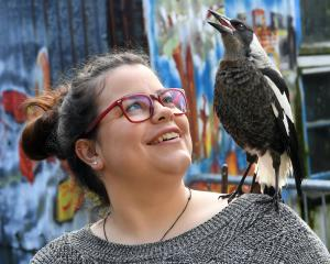 Pie the pet magpie launches into song on the shoulder of her human, Jessica Jack. Photo: Stephen...