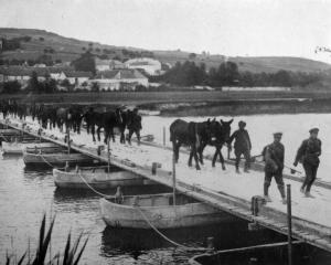 British transport mules and horses are led across a pontoon bridge on the Marne, France. - Otago...