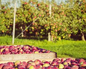 Some restrictions have been lifted but more tests are in the pipeline for apple and stonefruit...