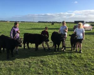Rangiora High School cattle show team members Abbie Walls (14, left), Ryan Ashworth (12), Alexis...