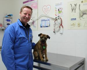 Murrays Veterinary Clinic in Mosgiel head veterinarian Donald Murray checks out Twig. Dr Murray...
