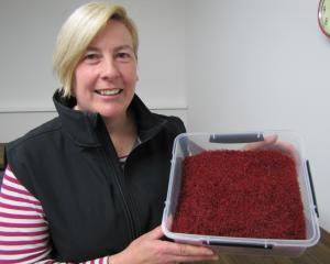 Wendy King shows off about 300g of Wynyard Estate saffron. Photo: Pam Jones