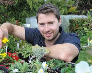 Bluestone Gardeners and Nursery owner Morgan Hampton, at his nursery in Sawyers Bay. Photo:...