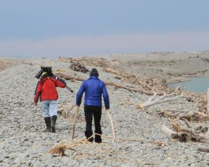 Dr Chris Lalas and Rosalie Goldsworthy search at the Waitaki River mouth, where Otago shags have...