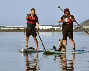 Peter  Kennett and his daughter Kate  paddleboard in Otago Harbour with Podge the dog yesterday....