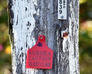 A red-tagged pole due for replacement. Photo: ODT