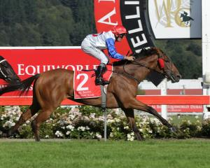 A Melbourne campaign is on the line for Canterbury-trained Savvy Coup who contests the Livamol...