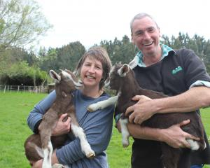 Tracy Tooley and Malcolm Gawn not only love creating soap (above) from goats' milk but they also...