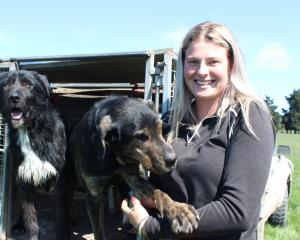 Huntleigh Station head shepherd Lauren Chittock (23) says training dogs is a highlight of her job...