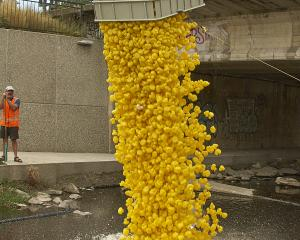 Making a splash . . . Thousands of rubber ducks will be poured into the Water of Leith for the...