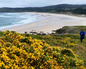 The hiking trail runs along deserted beaches and hillsides covered with brilliant yellow gorse...