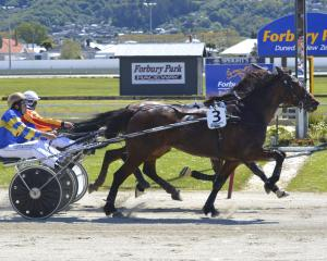 Whatasista and driver Matthew Williamson nose out Larch and Nathan Williamson at Forbury Park....