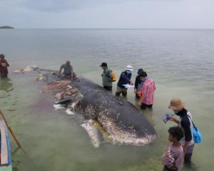 The whale was found with nearly 6kg of plastic waste inside it. Photo: Reuters