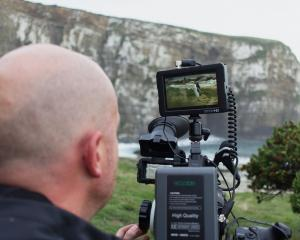 A cameraman films hoiho nesting in The Catlins. Photo: Supplied