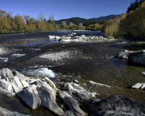 A 12-year-old girl managed to hold onto a branch after being swept down the Motueka River. Photo:...