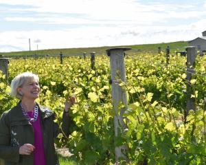 Janiene Bayliss, of Ata Mara vineyard, near Cromwell, is keen to see more school leavers made...