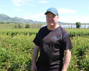 Rodger Whitson displays some of his peony plants. All will be picked by hand in the coming weeks...