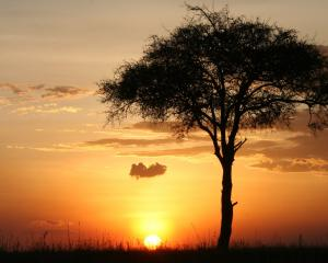 Game drives start early in the morning, and then later in the day often go past sunset. Before...