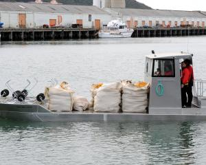 Southern Clams can begin harvesting in Otago Harbour again; pictured is purpose-built barge Tuaki...