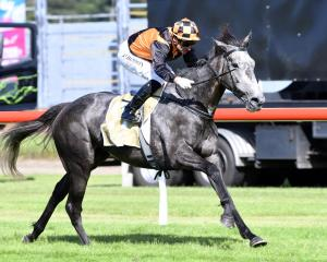 Danzdanzdance clears out to win  the group 1 Captain Cook Stakes at Trentham on Saturday. Photo:...