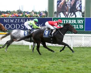 Elfee, pictured winning at Riccarton in May, is a leading chance in tomorrow's Oamaru Cup. Photo:...