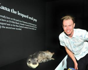 Otago Museum assistant curator natural science Kane Fleury with Kana the taxidermied leopard seal...