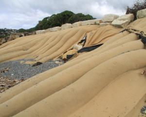 Sand sausages at Oamaru Harbour. Photo: Hamish MacLean