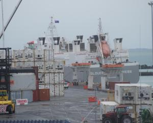 The Gloucester Express in PrimePort Timaru last week loading live cattle. Photo: Chris Tobin